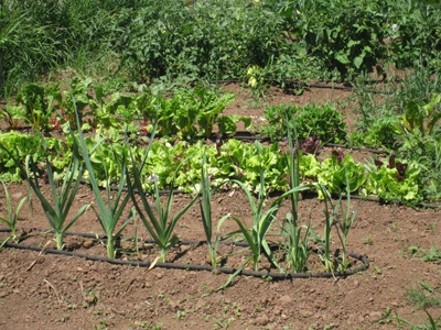 Growing your own food is a great place to start getting in touch with your environment